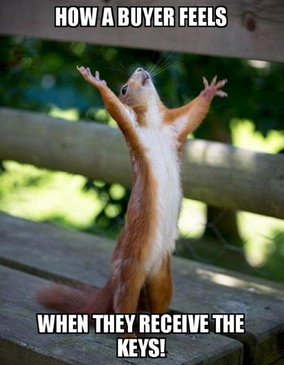 Corporate-Style-Story-House-Buyer-Meme-Squirrel-Outstretched-Arms